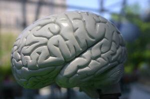Lecznicze właściwości mózgu
